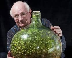 sealed bottle garden this sealed bottle garden hasn t been watered since 1972 twistedsifter