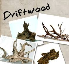 driftwood your direct access to the source of ornamental fish