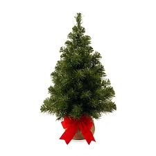 national tree company 2 foot noble spruce tree with burlap