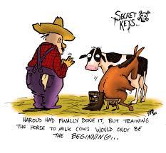 download wallpaper 1080x1920 barn funny cow kitten sony xperia