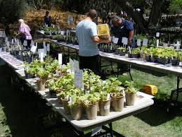 native plant sale botanic gardens plant sales