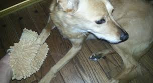 Mud Rugs For Dogs An Easy Way To Clean Dirty Dog Paws Simply Good Tips