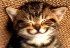 imagenes de gatitos sin frases antropólogo filantrópico palabros