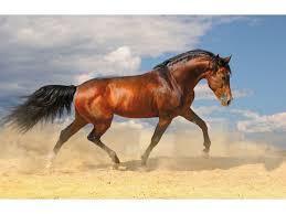 sous cheval bureau sous kangaro 44x68cm cheval erfu be furnitures de bureau