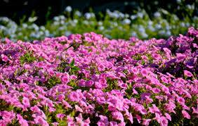 Brisbane Botanic Gardens Mount Coot Tha by Brisbane Botanic Gardens Mt Coot Tha U2013 The World In Colour