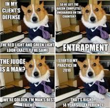 Lawyer Dog Meme - let s remember to think like a dog here people sweet baby