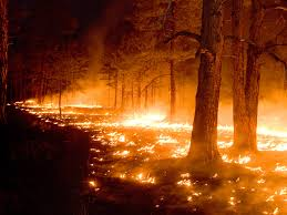 Wildfire On Freeform by Federal Funds To Help Fight Fire In New Mexico As Wall Looms Us