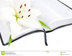 easter lily and bible royalty free stock image image 26015986