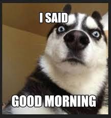 Funny Morning Memes - good morning funny memes memeologist com