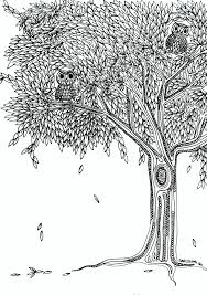 two owls in a tree coloring page coloring pinterest