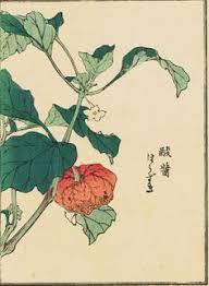 Japanese Lantern Plant Chinese Lantern Plant Jō Japanese Japan 20th Century Prints