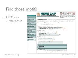 Meme Suite - chip seq