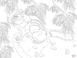eastern chipmunk coloring page free printable coloring pages