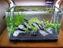 types of aquarium plant fertilizer aquatic mag