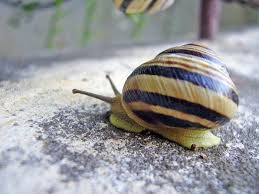 Where Can You Find Snails In Your Backyard Snail And Slug Symbolism Snail U0027s Messages For You Exemplore
