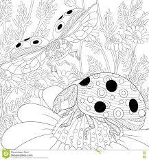 zentangle stylized two ladybugs stock vector image 72187893