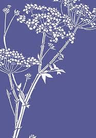 giant hogweed queen anne u0027s lace stencil lines could work as a
