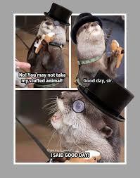 Good Day Sir Meme - gentleman otter imgur