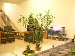 types of plants suitable to beautify the interior of a house