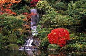 wallpapers tagged with japanese maple japanese tree garden