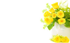 download wallpaper roses flowers flower yellow bright hd