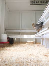 Chicken Coop Floor Options by Tips To Design A Better Backyard Chicken Coop Tilly U0027s Nest