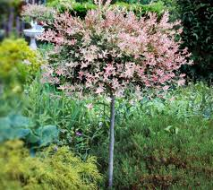 cottage farms flamingo willow patio tree page 1 qvc