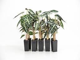 buy plants online buy indoor plants online u2013 plants in a box