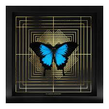 ulysses butterfly taxidermy curious department audenza