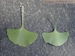 native plants of kentucky common plants of kentucky