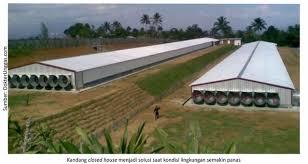 Termometer Kandang Ayam info medion closed house solusi peningkatan performa ayam