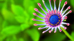 wallpaper best nature for desktop close up flower hd on download