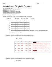 Dihybrid Crosses Worksheet Answers For Dihybrid Worksheet Name Period Worksheet