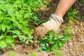 cura giardino prato diserbo e sfalcio cura e pulizia giardino cesena