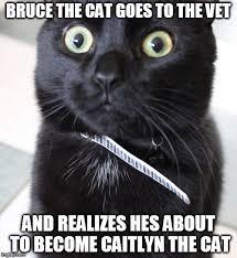 Vet Memes - woah kitty meme imgflip