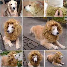 Lion Halloween Costumes Dogs Source Http Www Instructables Id Lion Dog Costume Allsteps