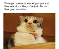 Sneeze Meme - sneezes my face when mfw that face when tfw know your meme