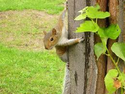 panoramio photo of a nosey squirrel in hyde park kensington gardens