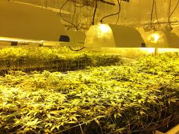 How Much To Build A 500 Sq Ft House What To Expect When Starting A Cannabis Business