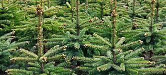 buying a tree in birmingham s garden centre