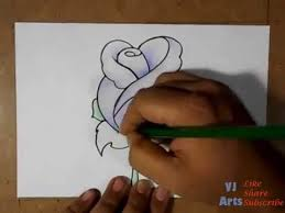 draw beautiful rose flower color rose
