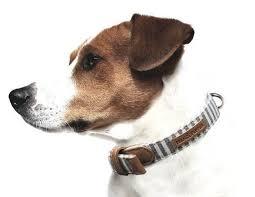 repulsif chien canapé magnifique repulsif chien canape meubles les 190 meilleures images