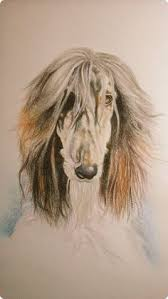 afghan hound judging list lilli31309006 everything i love afghan hounds aussies