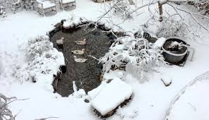 Is A Backyard Pond An Ecosystem How To Build A Backyard Pond With A Diy Biofilter Tyrant Farms