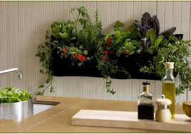 plant indoor wall planters suitable indoor wall planters uk