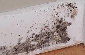 Removing Mold From Ceiling by How Do You Remove Black Mold Orange Mold