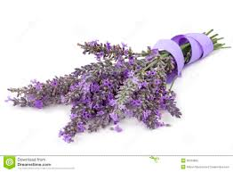 lavender ribbon lavender with ribbon white stock photo image 36356890