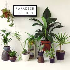 plants for office our top 7 unkillable indoor plants the ultimate desk plants