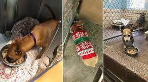 local shelter hosts thanksgiving dinner for homeless pups story