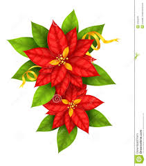 poinsettia pictures free download free poinsettia pictures free